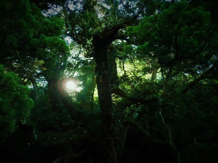 bIg  tree3
