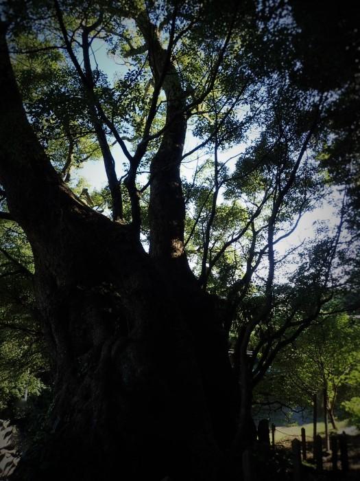 bIg  tree6